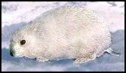 lemmings in arctic regions